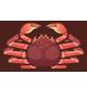 松葉蟹|集合啦!動物森友會|海洋生物