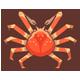 高腳蟹|集合啦!動物森友會|海洋生物