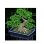 動森 秋季樹果系列 松樹盆栽